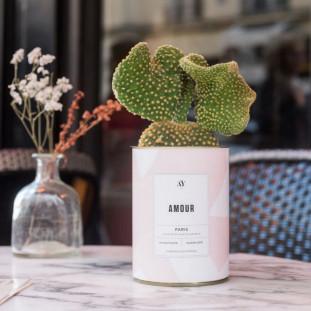 AMOUR Cactus