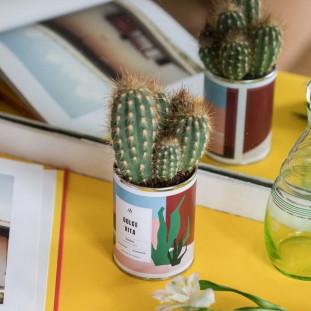 DOLCE VITA Cactus