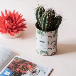 EXQUISE Cactus