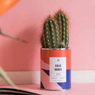 FOLIE DOUCE Cactus
