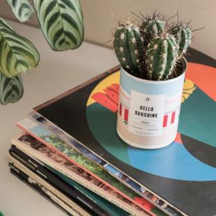 HELLO SUNSHINE Cactus