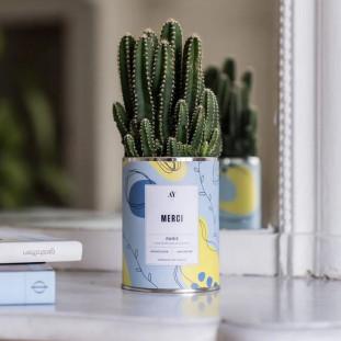 MERCI Cactus